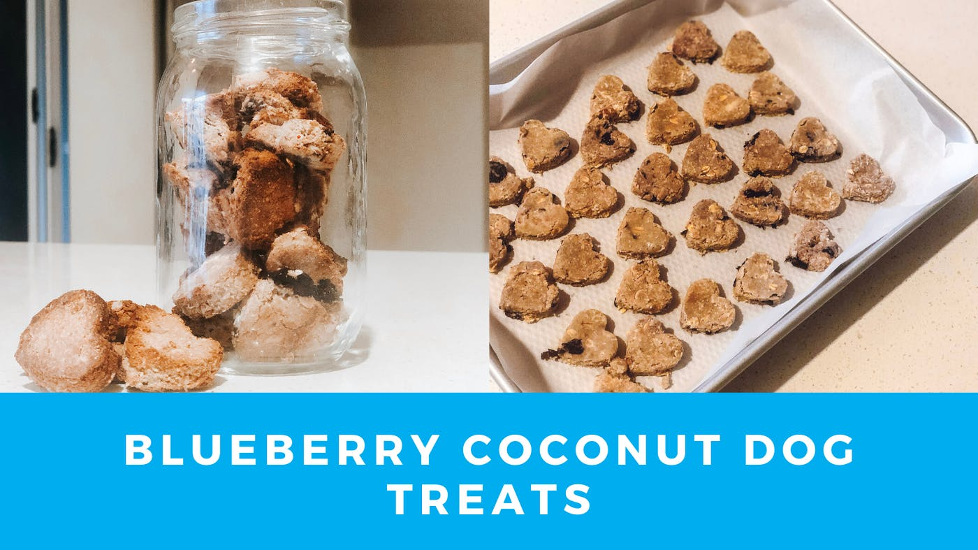 Blueberry Coconut Dog Treats