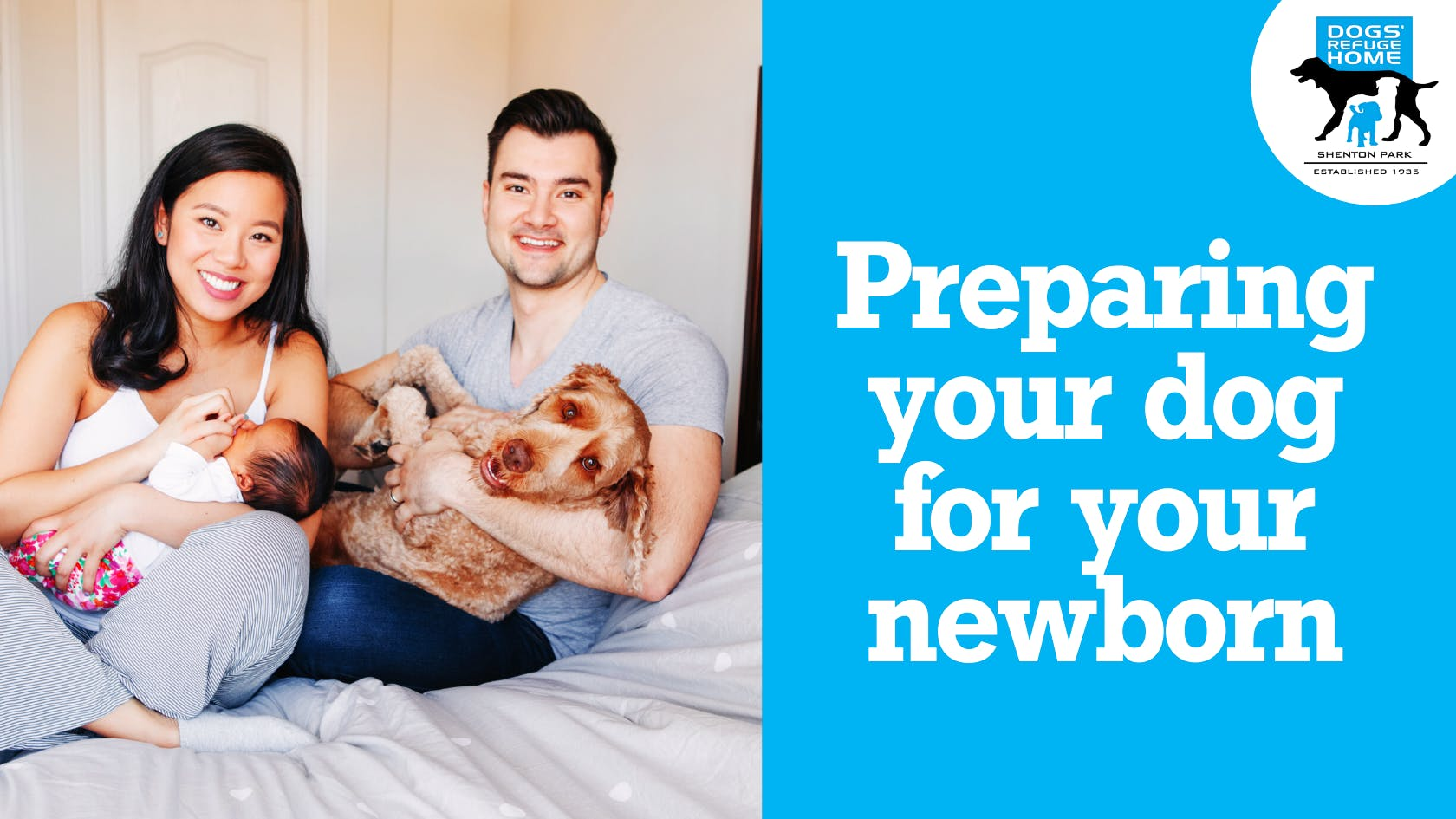 Preparing Your Dog For Your Newborn